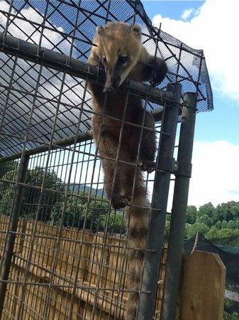 Creation Kingdom Zoo (...