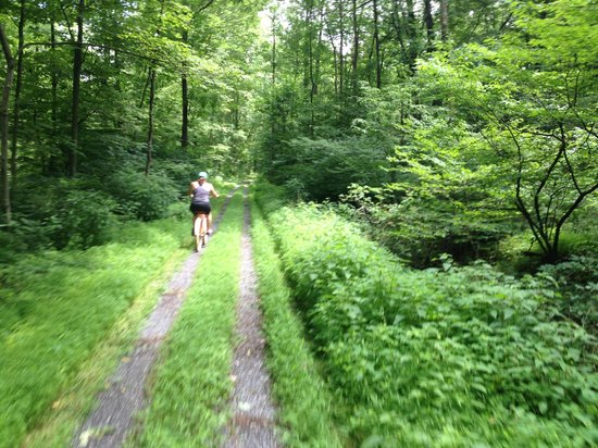 Lickdale Campground: Biking through the woods