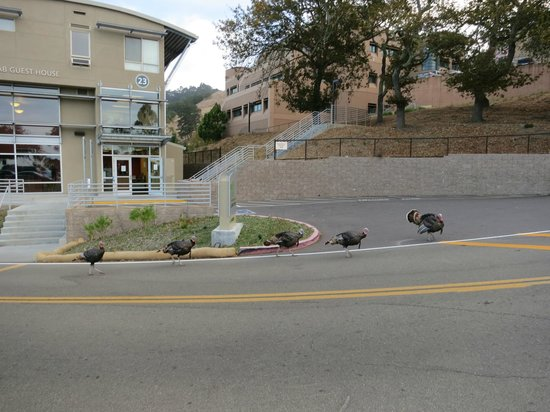 Berkeley Lab Guest House : Wild turkey parade marching by the Guest House
