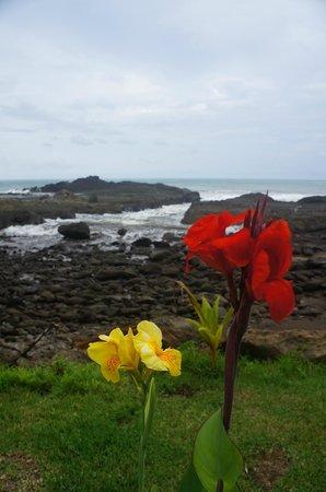 Costa Paraiso : blooming flowers & view of ocean