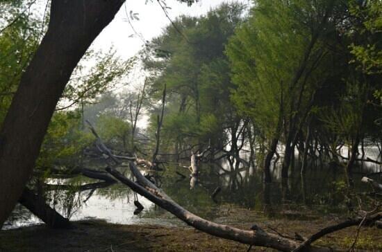 Thol Bird Sanctuary : beautiful bird sanctuary