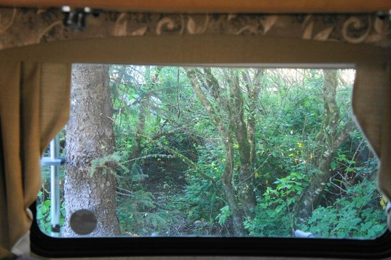 Turtle Rock Resort: View from camper window!