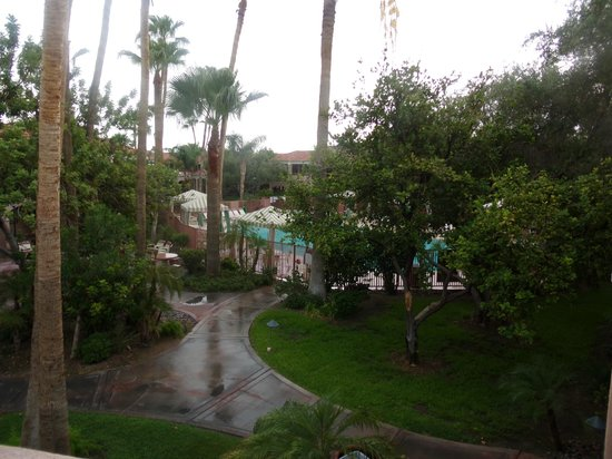 La Fuente Inn & Suites: trees around the grounds