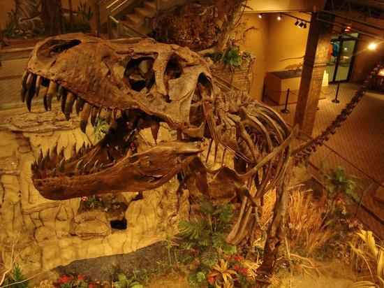 Glendive Dinosaur & Fossil Museum: Dinosauriermuseum in Glendive