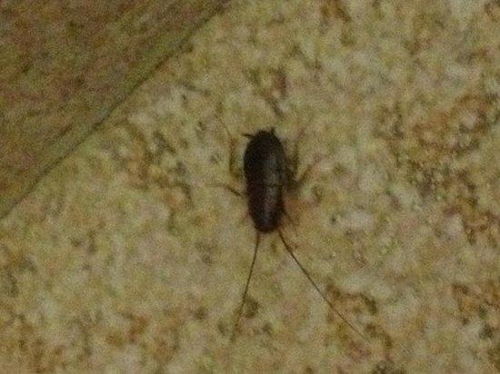 Ramada Limited Bakersfield North: Bugs