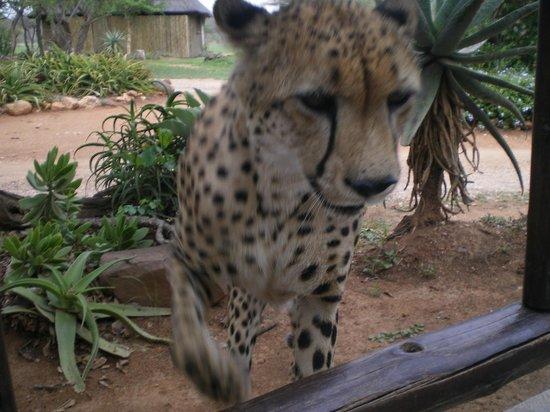 Hoedspruit, Afrique du Sud : mtombi
