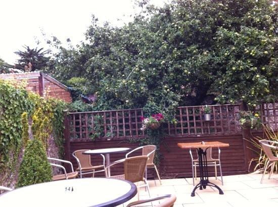 Apple Tree Tea Rooms: The view of the apple tree!
