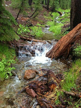 Kings Creek Falls: Late spring and the feeder creeks are still flowing strong