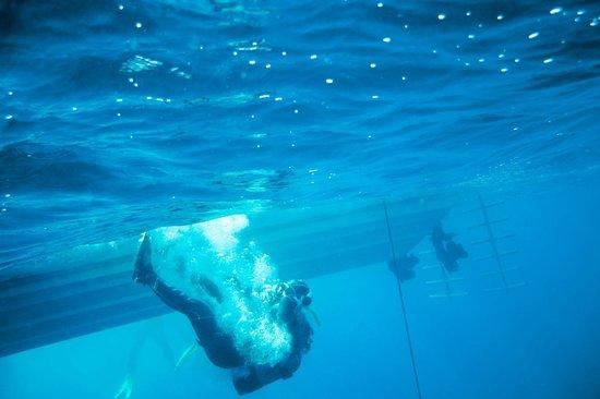 Scuba Ibiza Diving Center: Entering