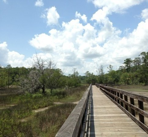 Skidaway Island State Park: We have nearly 6 miles of hiking trails.