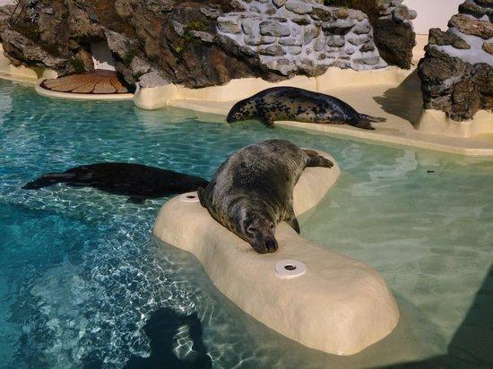 Aquarium de Biarritz: Phoques digérant au soleil
