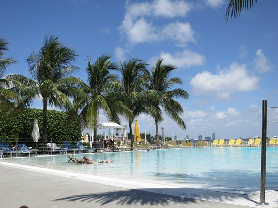 The Standard, Miami: The pool--awesome!
