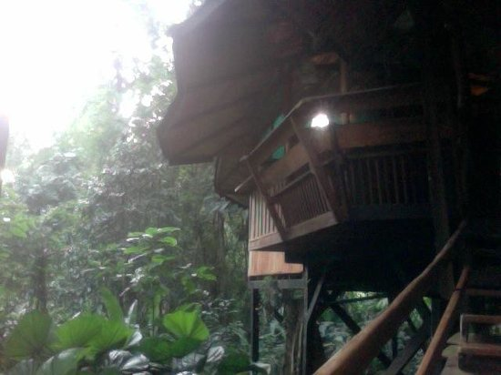 Tree House Lodge: view of the tree house