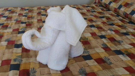 Cairns Motel: We were immediately charmed by the little elephant.