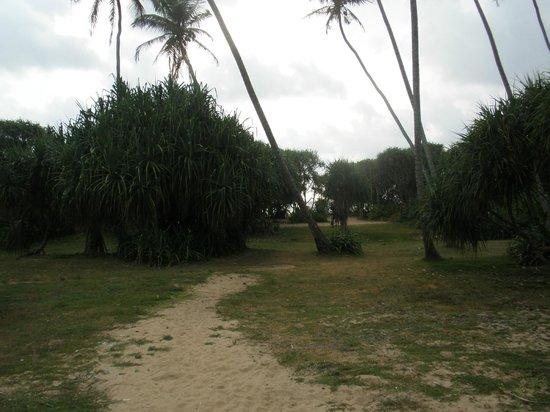 Paradise Road The Villa Bentota: ホテルからビーチまでの小道
