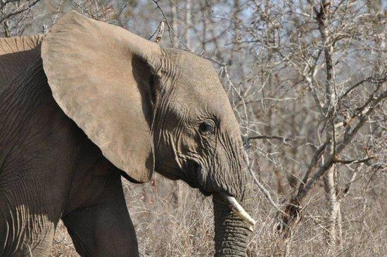 Hlane Royal National Park: Elephant