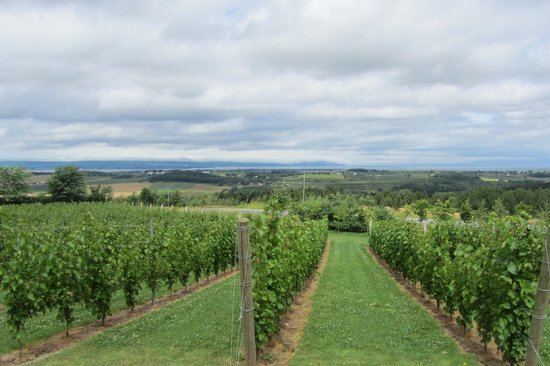 Grape Escapes Nova Scotia Wine Tours: Luckett's vineyard