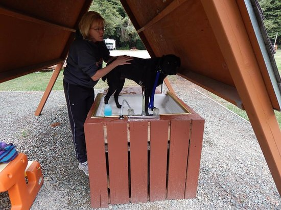 The Redwoods RV Resort: very cool doggy wash station