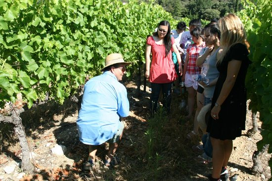 Prowinetour Day Tours : un peu de pédagogie sur la culture de la vigne