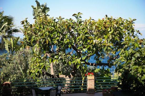Hotel Baia delle Sirene : giardino