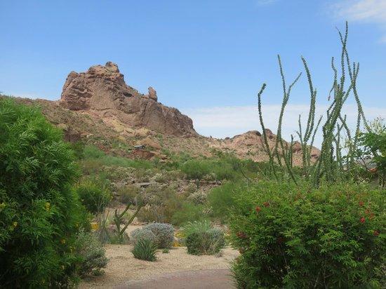 Sanctuary Camelback Mountain: View