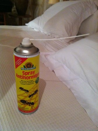 Monnaber Vell: Ant spray provided by kitchen staff