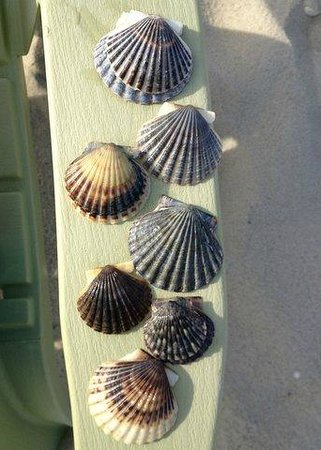 Inn On The Beach: Morning's shells
