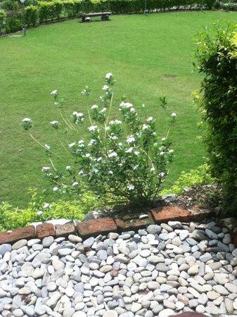 Corbett Heaven Resort : Greenery