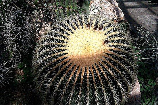 Palmiarnia Poznanska (Palmenhaus Poznan): Piękne kaktusy