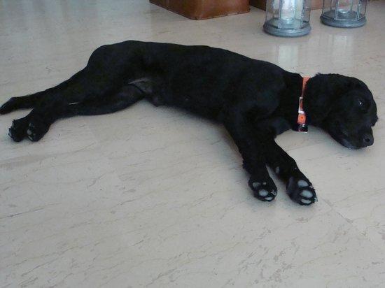 Hotel Matina: собака Спиридон