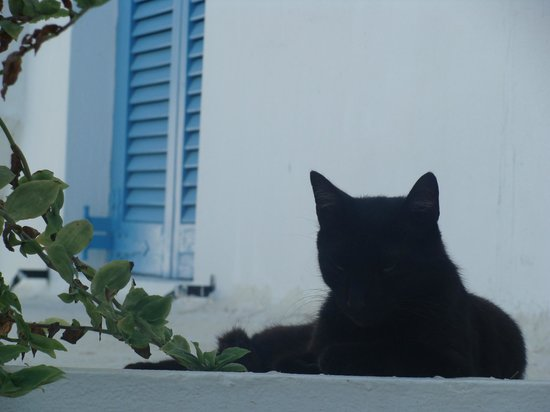 Hotel Matina : black cat