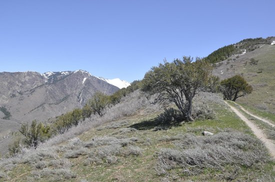 Looking up City Creek Canyon from the southern ridge line