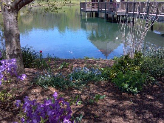 Meadowlark Botanical Garden: pond with koi