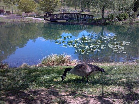 Meadowlark Botanical Garden: bridge