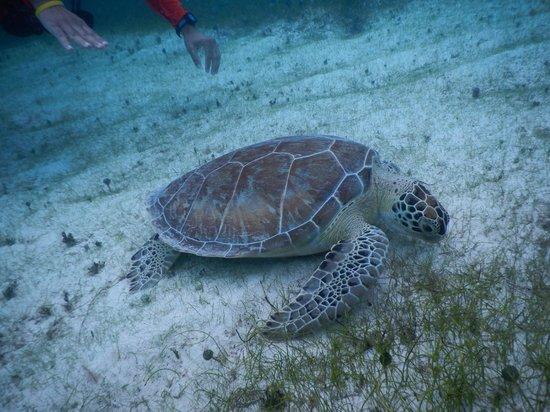 Akuazone Dive Center: Friendly Sea Turtle