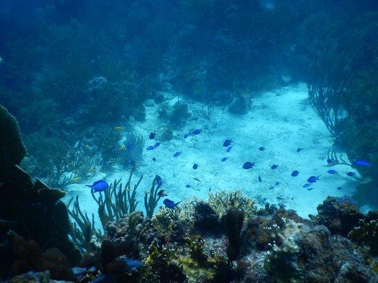 Akuazone Dive Center: Great Reefs