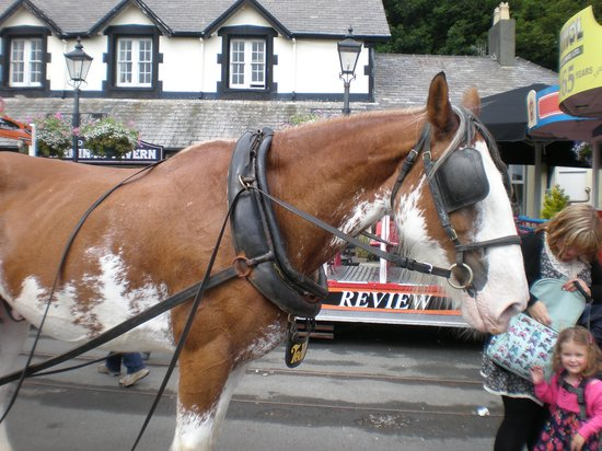 Douglas Bay Horse Tramway: Teddy, just having a rest.