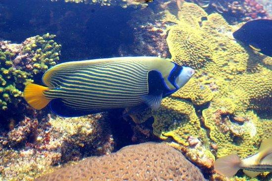 Underwater Observatory Marine Park : Depuis l'observatoire