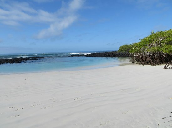 Galapagos Beach at Tortuga Bay: the snorkle spot