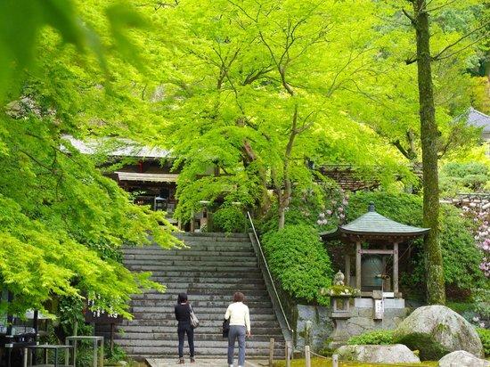 Daikozenji Temple: 春の大興善寺境内
