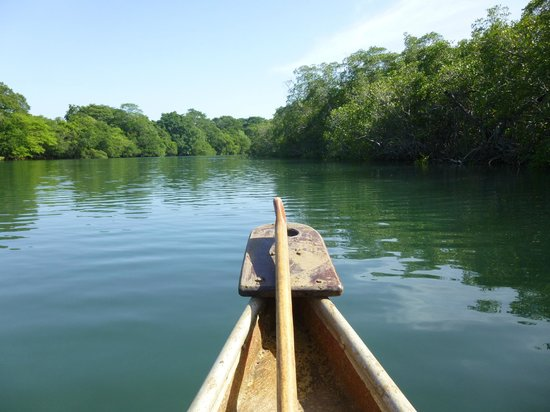 Playa Grande, Kosta Rika: Canoe tour in the nearby estuary.