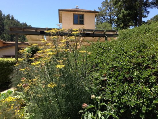 Pine Ridge Winery : Gardens were great too