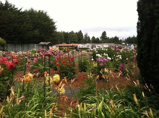 ยูเรกา, แคลิฟอร์เนีย: View of the garden