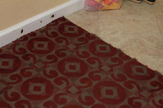Best Western Bayfront : Nasty carpet