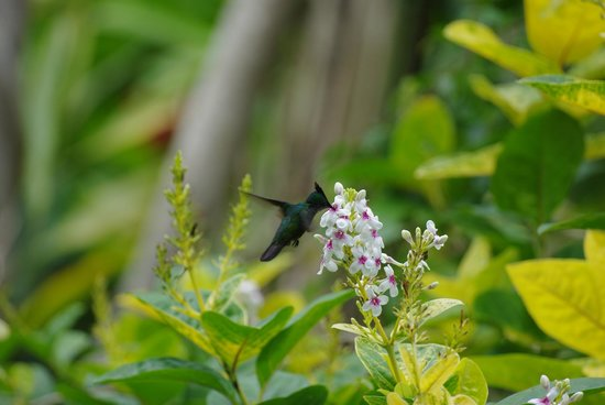 Case cr ole photo de au jardin des colibris deshaies for Au jardin des colibris