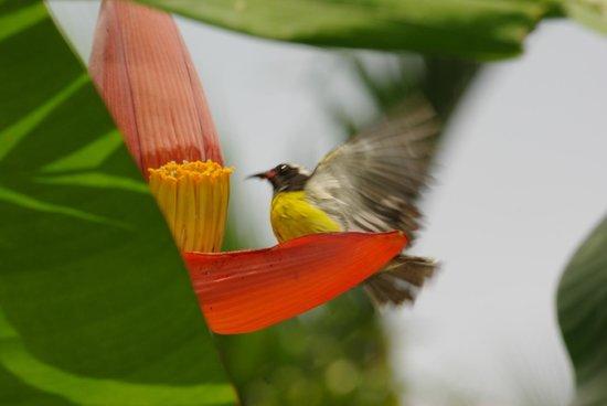 Sucrier fotograf a de au jardin des colibris deshaies for Au jardin des colibris