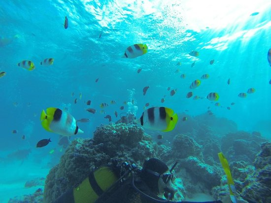 TOPDIVE Bora Bora: The amazing fish--it was like being inside an aquarium