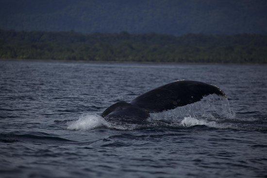 El Almejal Lodge & Natural Reserve: Ballenas a la vista!