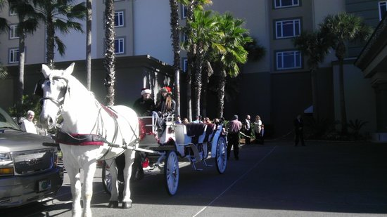 Amelia Island Carriages: Boomer has had the honor of taking Santa to the Ritz-Carlton for 6 years in a row!