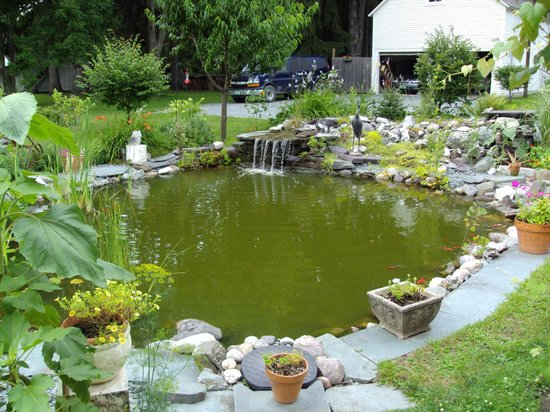 Haven Guest House Bed & Breakfast: Fish Pond